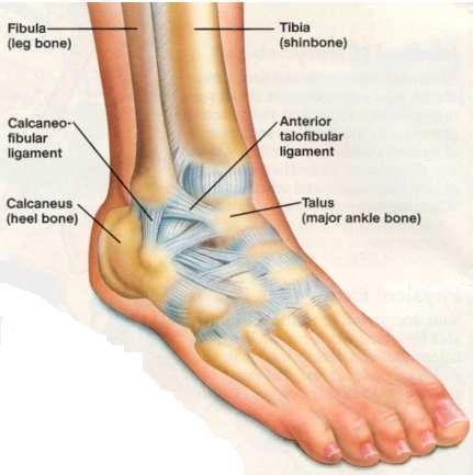 torn-ankle-ligament1