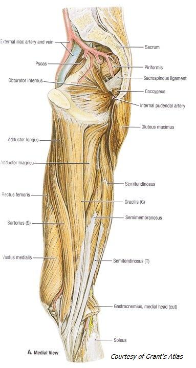 med-view-of-leg